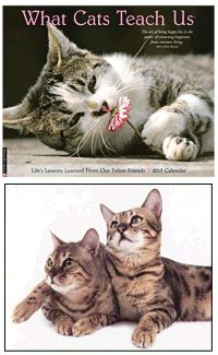 What Cats Teach Us 2013 Calendar &  purchase benefits animal rescue via The Animal Rescue Site