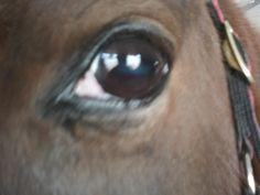 My Sweet Bella's soft eye...