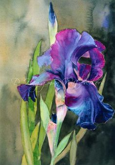 D. Haggman  :Purple Iris : watercolour.