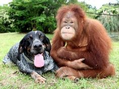Everyone can get along :)
