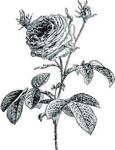 **FREE ViNTaGE DiGiTaL STaMPS**  Rose image