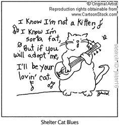 kitten, shelter cat, cat blue