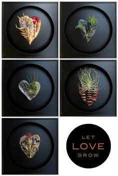 Air-dry clay hearts and tillandsias for Valentine's Day