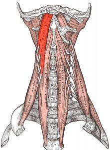 Боль в правом боку внизу спины при беременности