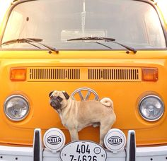 VW and a pug.. My life is complete