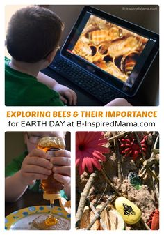 Why Are Bees Important? - Earth Day Learning for Kids - #kids #earthday #kbn #binspiredmama