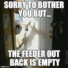 Sorry to bother you - but the feeder out back is empty.