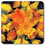 Organic Resina Calendula  are very tasty and have more medicinal properties than you can imagine