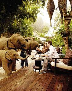 Four Seasons, Thailand. The elephants just roam around the property.