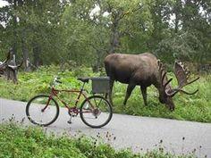 Tony Knowles Coastal Bicycle Trail - Anchorage, Alaska (11 miles)