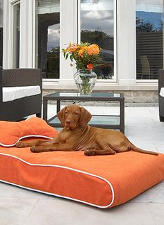 A pet bed fit for the pup of the house.