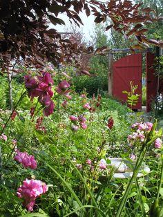 Gates Fences Pathways Gardens On Pinterest Garden