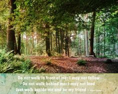 Woodland photography friendship quote fine art by ZenzPhotography,