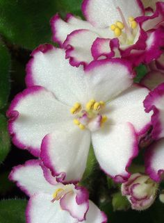 ~~African Violet by Picture Zealot~~