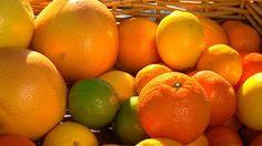 Citrus care - troubleshooting lemon tree 101