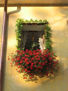 prague window    flowers in a window, prague