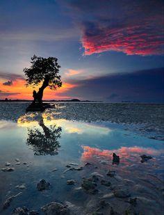 photography of nature, nature photography ideas, nature beauty, seas, tree, coloring, beauti, natur photographi, color sea