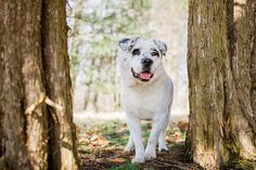 Bright Ideas for Using Video in Animal Rescue Work - Mary Maier Photography