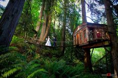 Rainforest Hotel Built in the Trees: Tree House Point