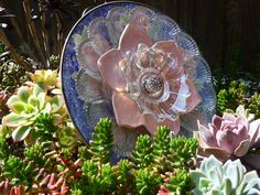 .Drought Resistant Plate Flower