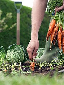 "Home gardens were a must, not a hobby!! It meant ""putting up"" fruits/ veggies so we would have food during the winter months."