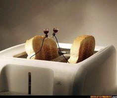 laugh, stuff, funni, art, humor, bent object, terri border, thing, toast toast