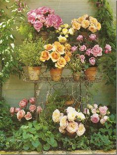 roses,roses,roses