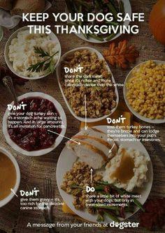 dogs, dog lovers, dog tips, dog food, food safety, safety tips, thanksgiving foods, dog safe, pet tips