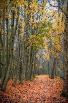 Forest Path in Autumn~ Amazing World