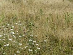 When and How to Cut Your Wildflower Meadow | Habitat Aid
