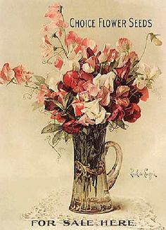 flower - sweet pea flower seeds by ronijj, via Flickr
