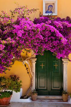 Blossoms over doorway to Greek Orthodox Monastery of the Virgin Mary on Cofu, Greece