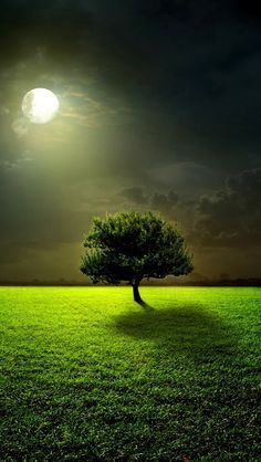 #green dreamscape, art, green nature, full moon, beauty, ansel adams, glow, book series, tree of life