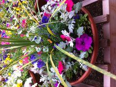 Pretty spike an petunia flower pot arrangement  Spike Flower Arrangement