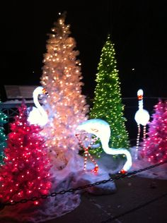 Swans at Wild Lights