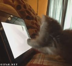 Even his/her judo skills are of no use. | The Best Cat GIF Post In The History Of Cat GIFs