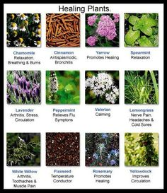 Healing Plants   for daily tips, seed contests, and plant info, join us on facebook https://www.facebook.com/thegardengeeks