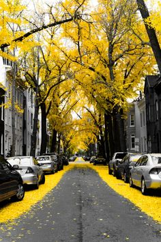 fall leaves, autumn, color, city streets, black white, yellow brick road, grey, beauty, triangl