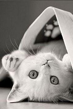 Awww. Kitten under a paper.