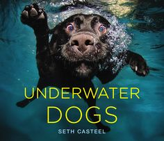 coffee tables, photo books, underwater dogs, picture books, baby dogs, dog photography, new books, coffee table books, christmas gifts