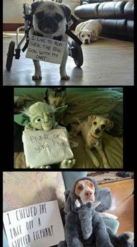 The ultimate dog shaming compilation…