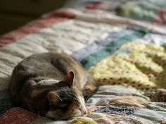 Sleeping cat on a pretty quilt