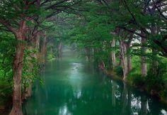 Many a Tree... tree, dream, texa, path, forest, kayak, place, united kingdom, river