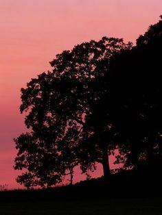 Tree in Silhouette, by Steve Mayeshiba, August 2013