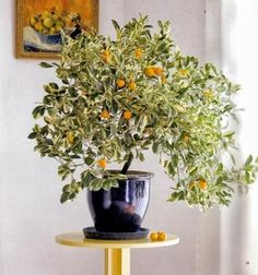 Stunning orange trees