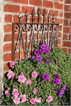 love the iron gate as a backdrop to the the flowers.