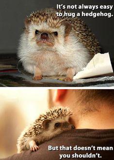 Hugging a Hedgehog