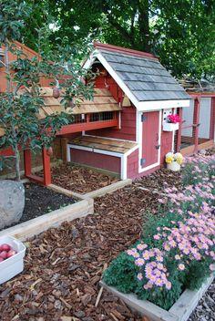 chicken coop. backyard chicken, chicken coop, the bridge, red barns, garden