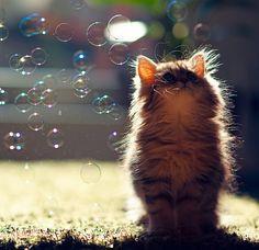 bubbles cute #picture
