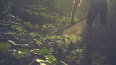 "garden by tiger in a jar. song: ""heavy water"", grouper film, song, tiger, jar, garden"